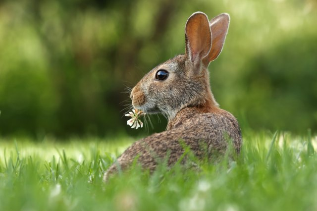 Cute bunny rabbit with flower in mouth