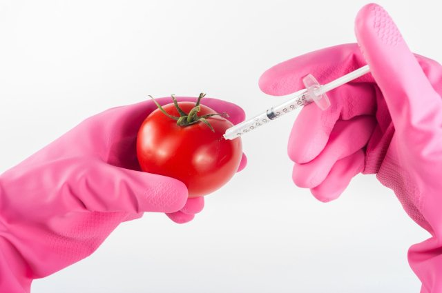 Tomato being injected with needle