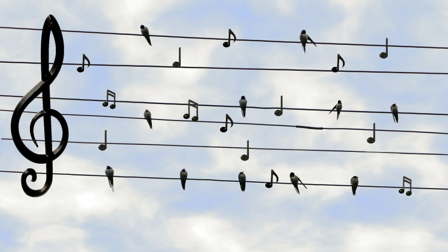 things I'm thankful for - birds and music notes on power line