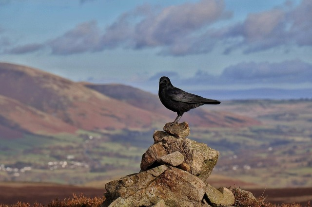 bird on perch - truth is a vantage point that offers clear vision