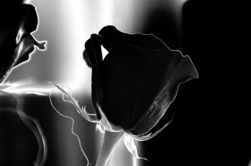 Valentine's Day black flower #black #rose #flower #blackrose #singleness #depression