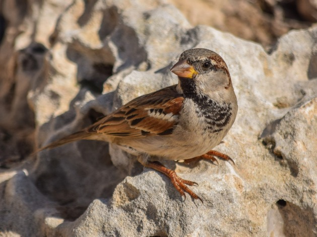 picture of bird on rock - dry place to rest, a shield from waves